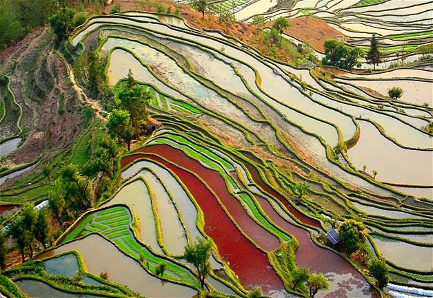 Plantação de arroz Yuanyang, na China