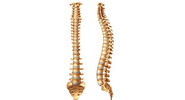 Muitas vezes O valor do cuidado com a coluna vertebral | NovaFisio | Página 3 YK17